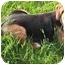 Photo 3 - Beagle Mix Dog for adoption in Toronto, Ontario - Sadie