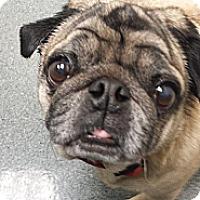 Adopt A Pet :: Otis - Walled Lake, MI