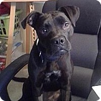 Adopt A Pet :: Shelby - Charlotte, NC
