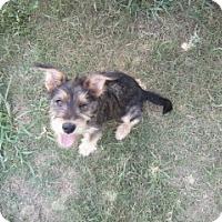 Adopt A Pet :: Sasha - Gadsden, AL