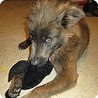 Adopt A Pet :: Bones in SC - Jamestown, CA