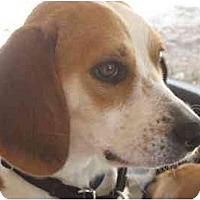 Adopt A Pet :: Doris Day - Phoenix, AZ