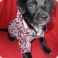 Adopt A Pet :: Cupid - Hadley, MI