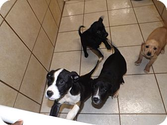 Hound (Unknown Type) Mix Puppy for adoption in Thomaston, Georgia - Standing Room Only