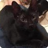 Adopt A Pet :: Ford-Fabulous! - East Hanover, NJ