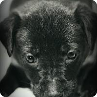 Adopt A Pet :: Tobias - Fredericksburg, VA