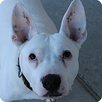 Adopt A Pet :: Max - Council Bluffs, IA