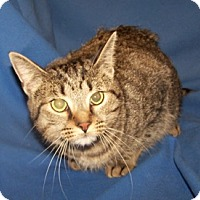 Adopt A Pet :: Sahara - Colorado Springs, CO