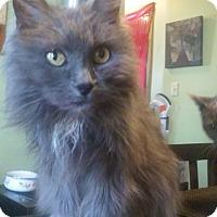 Adopt A Pet :: Fiona - Acushnet, MA