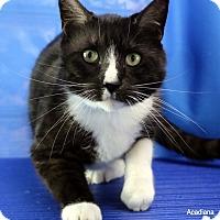 Adopt A Pet :: Cisco - Carencro, LA