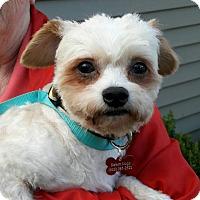 Adopt A Pet :: Alfie - Salem, OR