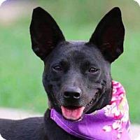 Adopt A Pet :: Reese - San Ramon, CA