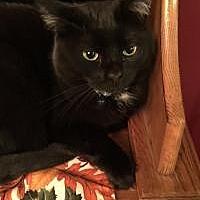 Adopt A Pet :: Elvira - Manchester, CT