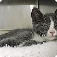 Adopt A Pet :: Parker - Massapequa, NY