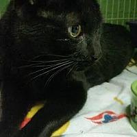 Adopt A Pet :: Mishu - Bloomingdale, NJ