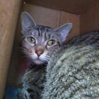 Adopt A Pet :: Kelly - DeKalb, IL