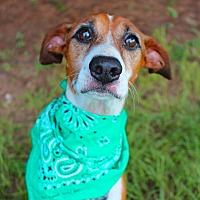 Adopt A Pet :: Leo - Fort Valley, GA