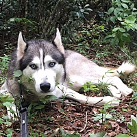 Adopt A Pet :: Aurora - Roswell, GA