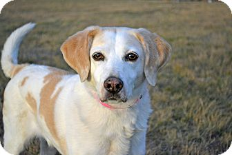 Pointer Mix Dog for adoption in Cheyenne, Wyoming - Zoe