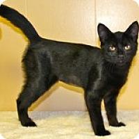 Adopt A Pet :: Artemis - Atlanta, GA