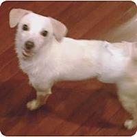 Adopt A Pet :: Charlie - Duluth, GA