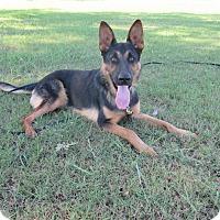 Adopt A Pet :: Ernst Von Altenberg - Phoenix, AZ