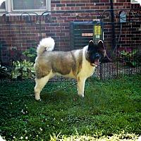 Adopt A Pet :: Hera - Virginia Beach, VA