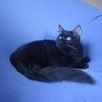 Adopt A Pet :: Emmie - Sarasota, FL