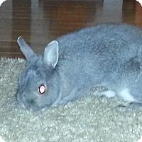 Adopt A Pet :: Elsa - Maple Shade, NJ