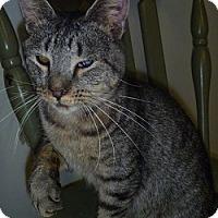 Adopt A Pet :: Heidi - Hamburg, NY