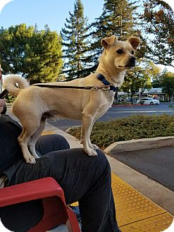 Terrier (Unknown Type, Small)/Pug Mix Dog for adoption in San Francisco, California - Freddy