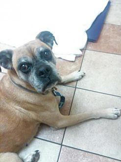 Boxer Dog for adoption in Wilmington, North Carolina - Cinnamon