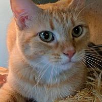 Adopt A Pet :: Sara - Louisa, VA