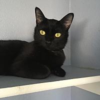 Adopt A Pet :: Agatha - Winchester, CA