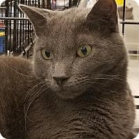 Adopt A Pet :: Wolfgang - Herndon, VA