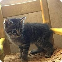 Adopt A Pet :: Lou - Somerset, KY