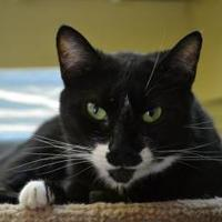 Adopt A Pet :: Tracey - Erie, PA