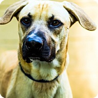 Adopt A Pet :: Rocco - Port Washington, NY