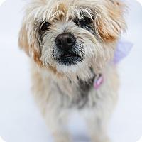 Adopt A Pet :: Sammie - Los Angeles, CA