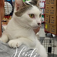 Adopt A Pet :: Heidi - Wichita Falls, TX