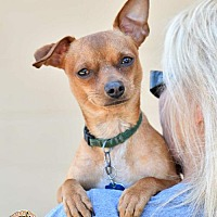 Adopt A Pet :: Hank - Mt. Vernon, IN