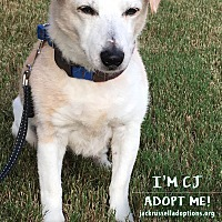 Adopt A Pet :: CJ - Conyers, GA