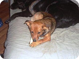 Pomeranian Mix Dog for adoption in Irvington, Kentucky - Tootsie