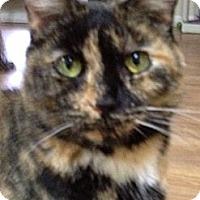 Adopt A Pet :: Schafer - Monroe, GA