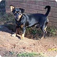 Adopt A Pet :: Radar - York, SC