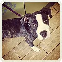 Adopt A Pet :: Linus - Los Angeles, CA