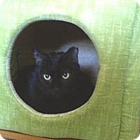 Adopt A Pet :: Licorice - Portland, ME