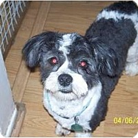 Adopt A Pet :: Oreo - Andrews, TX