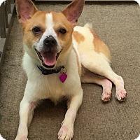 Adopt A Pet :: Nitro - Toms River, NJ