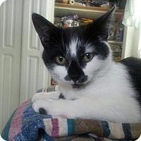 Adopt A Pet :: Koko - Raritan, NJ
